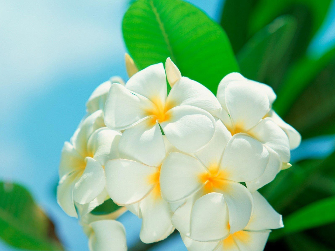 25910 скачать обои Растения, Цветы - заставки и картинки бесплатно