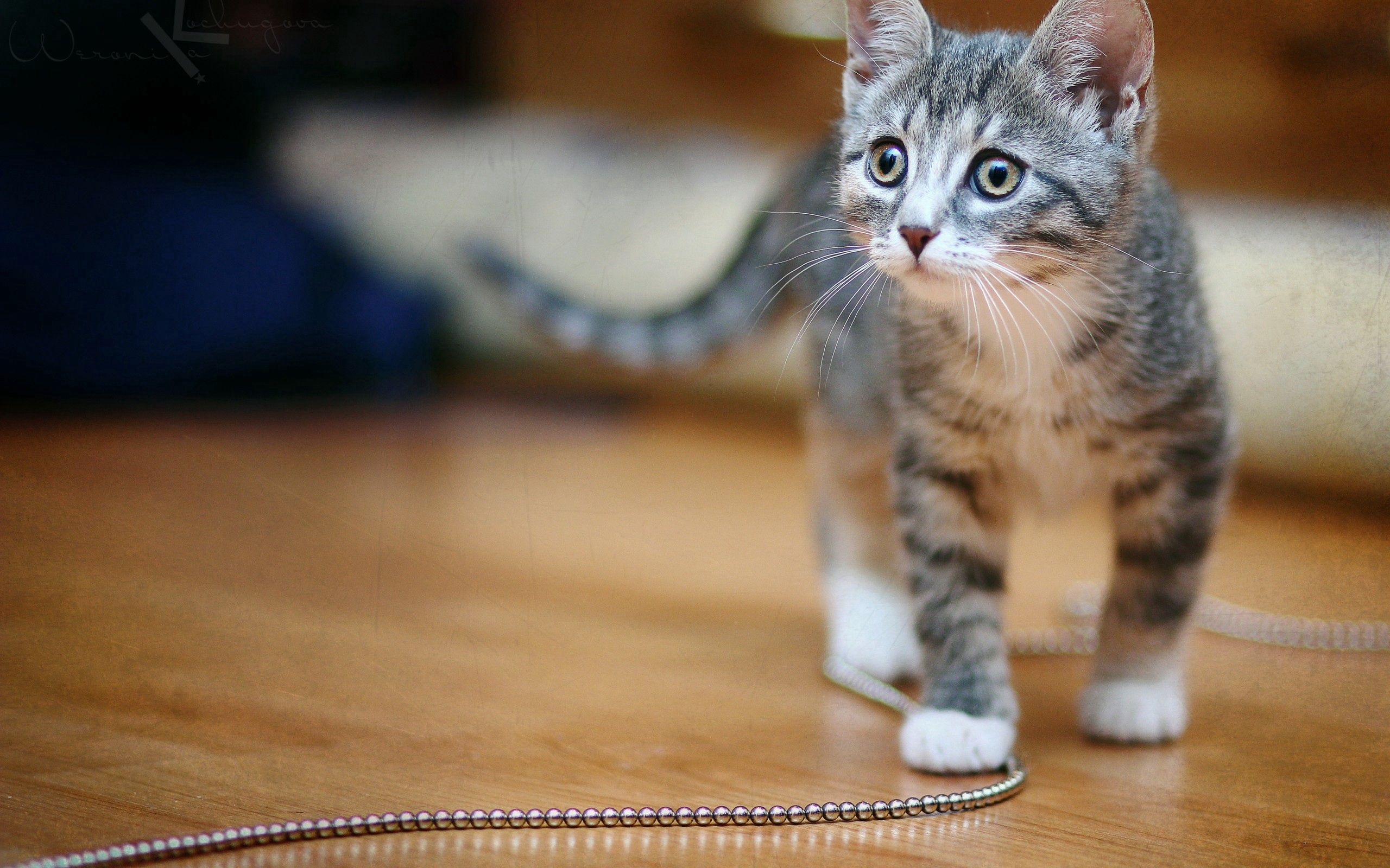 94872 download wallpaper Animals, Kitty, Kitten, Chain, Spotted, Spotty screensavers and pictures for free
