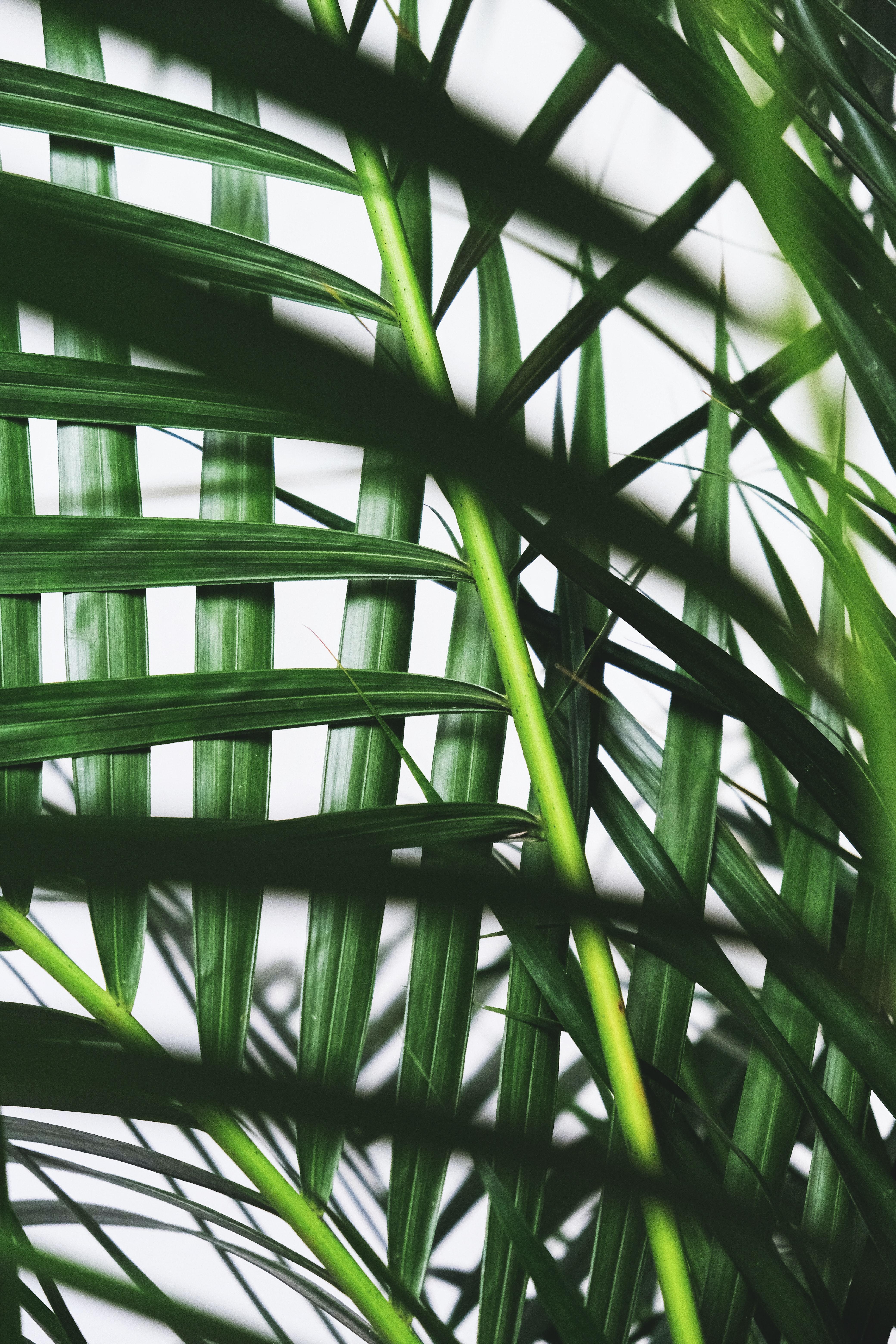 116402 скачать обои Ветки, Листья, Растение, Макро, Пальма - заставки и картинки бесплатно