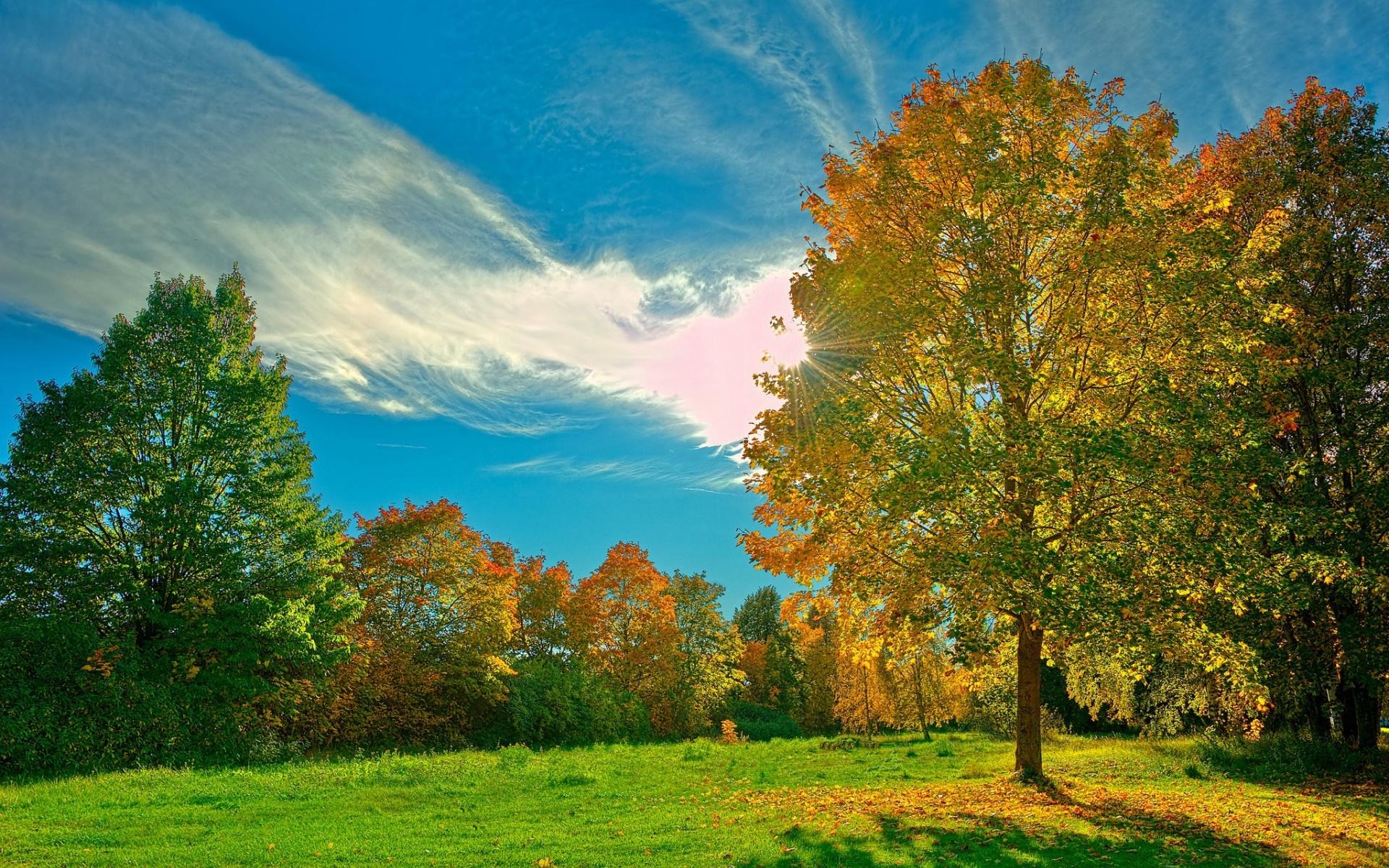 20718 скачать обои Пейзаж, Деревья, Небо, Осень, Облака - заставки и картинки бесплатно