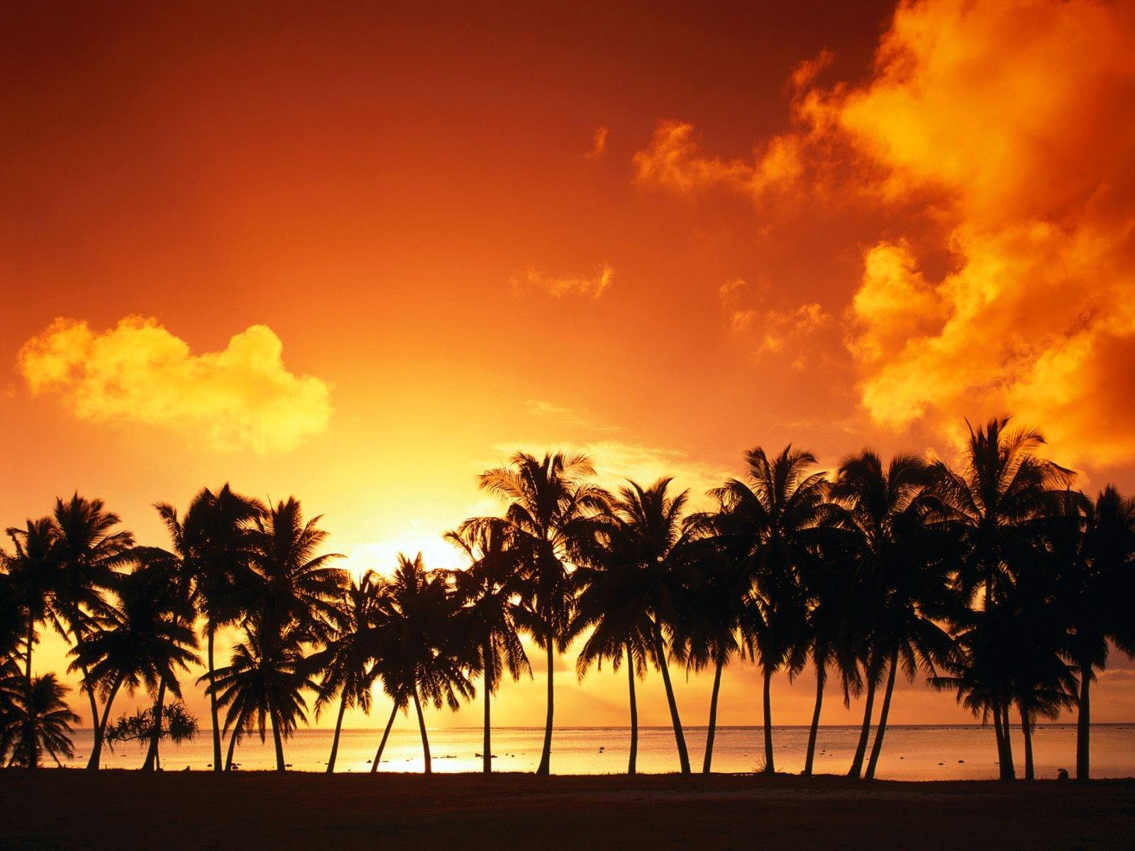3251 скачать обои Пейзаж, Закат, Небо, Пальмы - заставки и картинки бесплатно