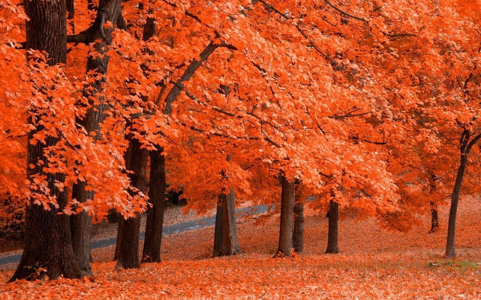 7135 скачать обои Пейзаж, Деревья, Осень - заставки и картинки бесплатно