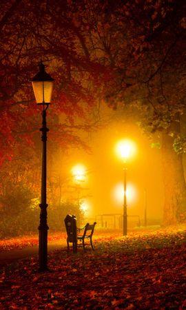 22801 скачать обои Пейзаж, Деревья, Листья, Улицы, Ночь - заставки и картинки бесплатно