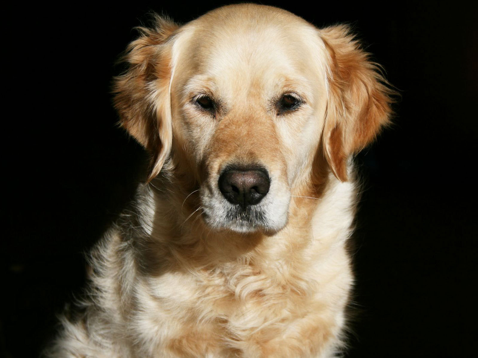 12502 download wallpaper Animals, Dogs screensavers and pictures for free
