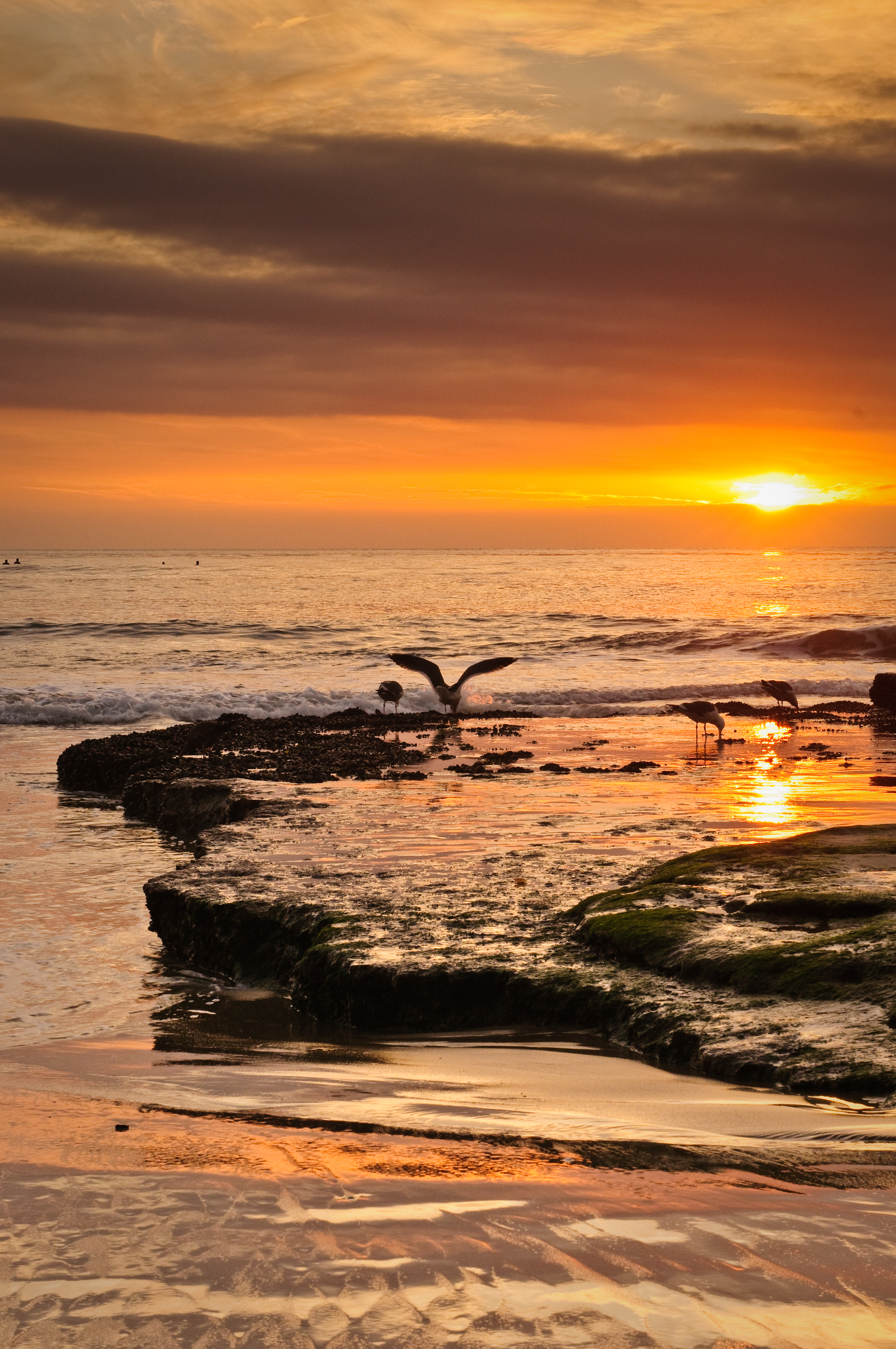 133399 download wallpaper Nature, Sea, Sunset, Coast, Waves, Birds, Seagulls screensavers and pictures for free