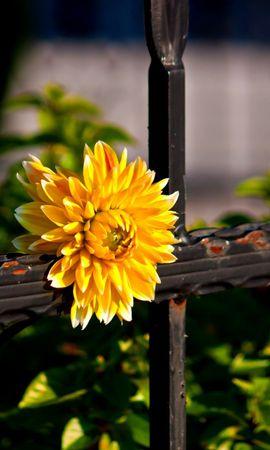 44678 télécharger le fond d'écran Plantes, Fleurs - économiseurs d'écran et images gratuitement