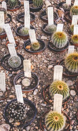 146971 descargar fondo de pantalla Flores, Plantas De Interior, Plantas, Ollas, Tiestos, Cactus: protectores de pantalla e imágenes gratis