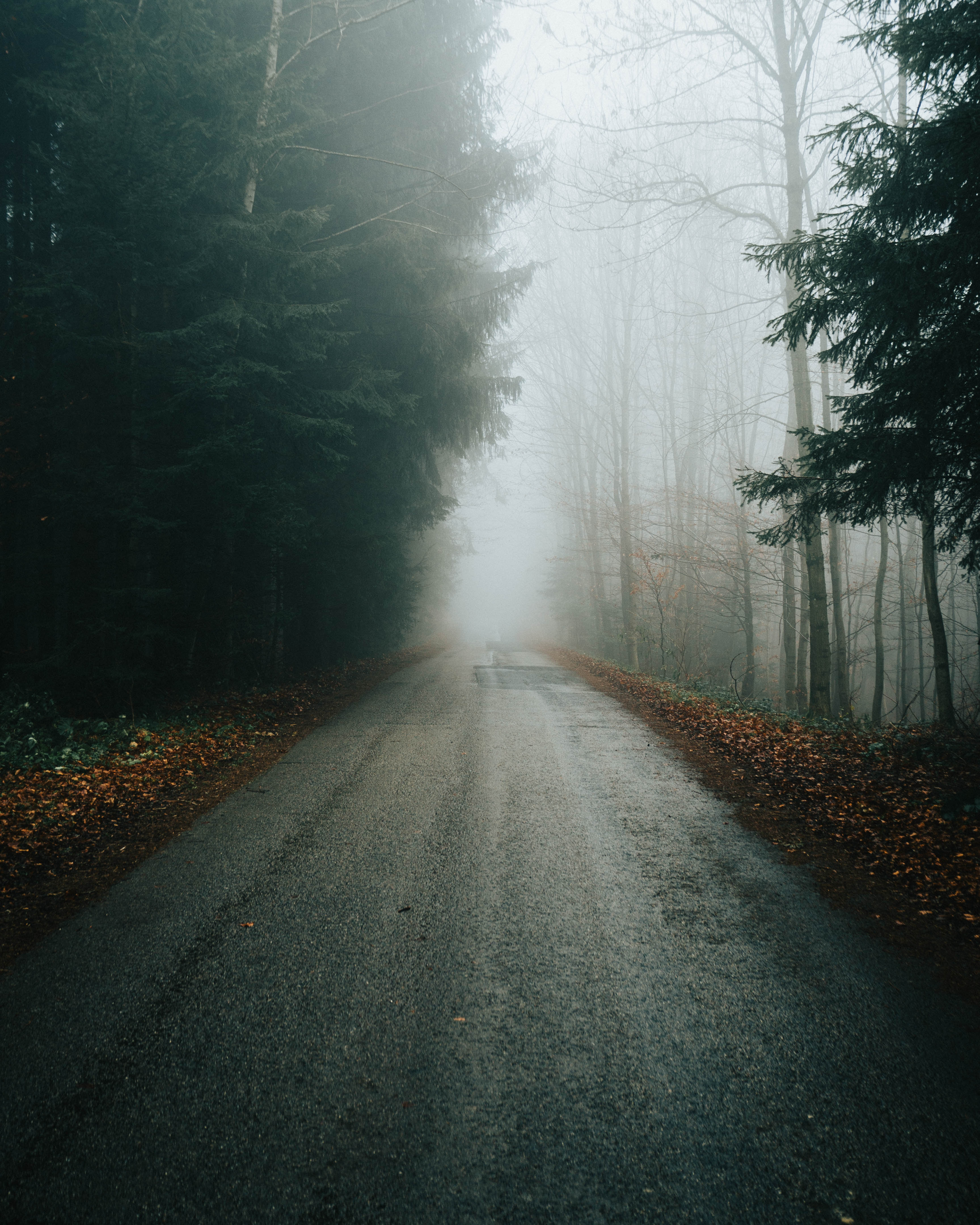 54557 Screensavers and Wallpapers Road for phone. Download Nature, Trees, Autumn, Road, Fog, Branches pictures for free