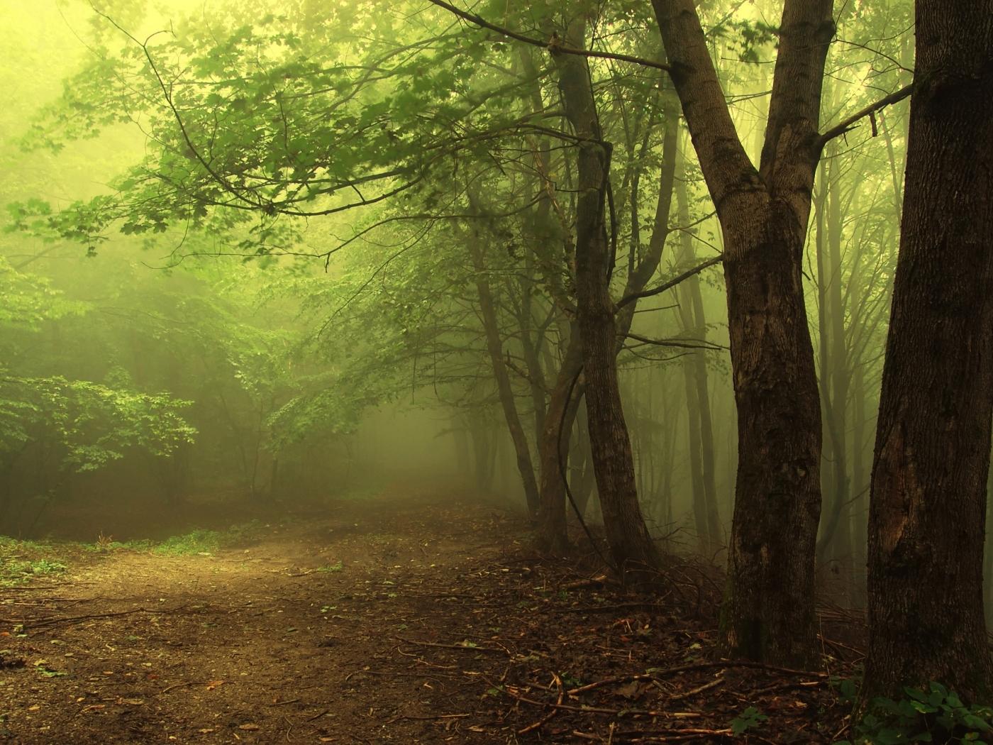 24630 скачать обои Пейзаж, Деревья, Дороги - заставки и картинки бесплатно