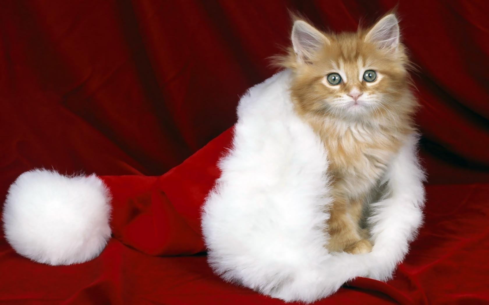9517 скачать обои Праздники, Животные, Кошки (Коты, Котики), Новый Год (New Year), Рождество (Christmas, Xmas) - заставки и картинки бесплатно
