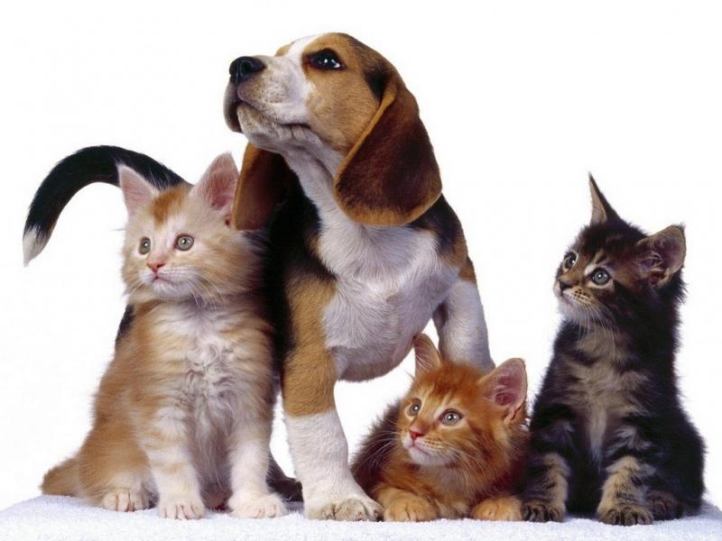 33337 скачать обои Собаки, Кошки (Коты, Котики), Животные - заставки и картинки бесплатно