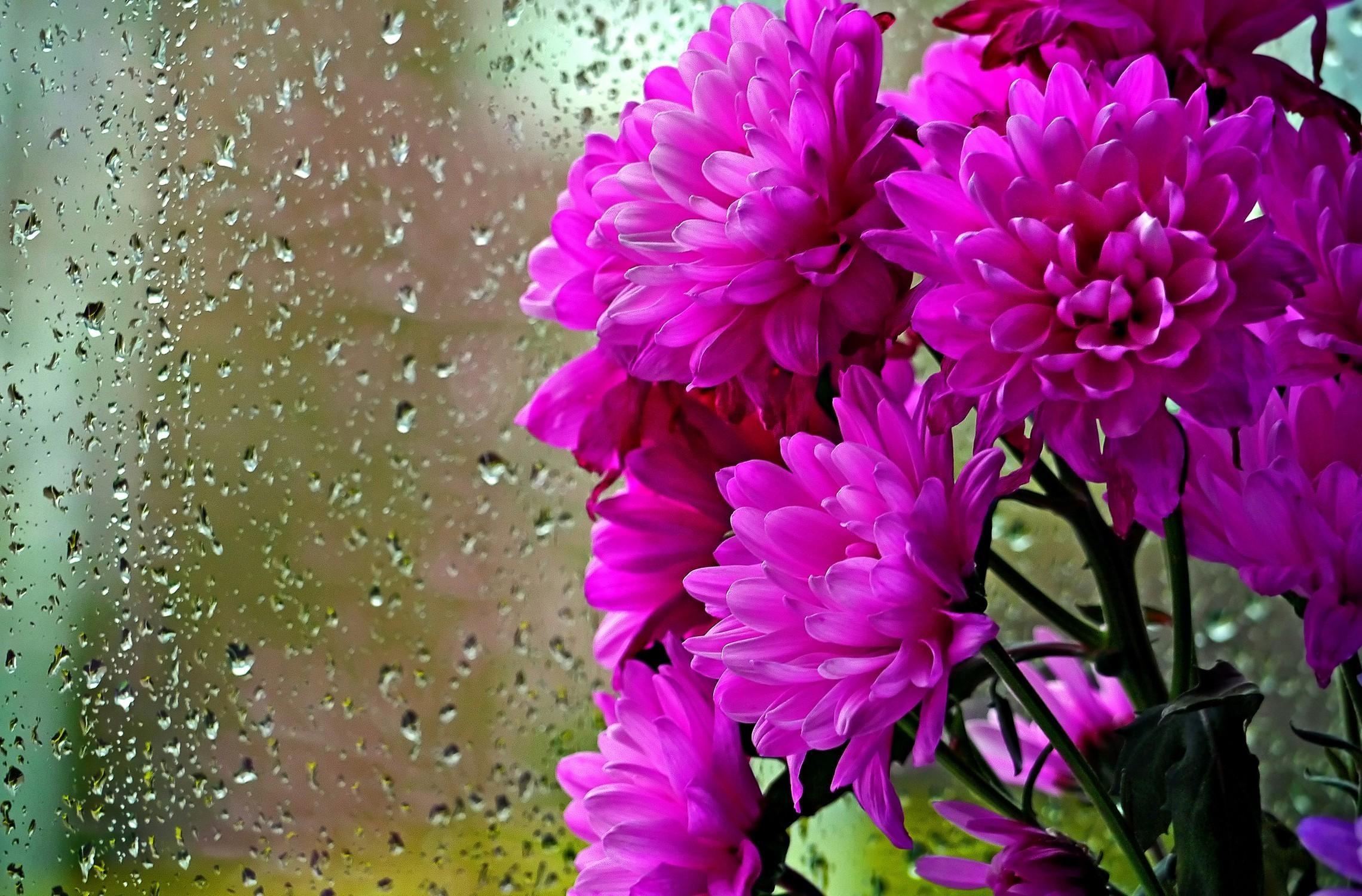 98895 скачать обои Цветы, Букет, Стекло, Капли, Дождь, Хризантемы - заставки и картинки бесплатно