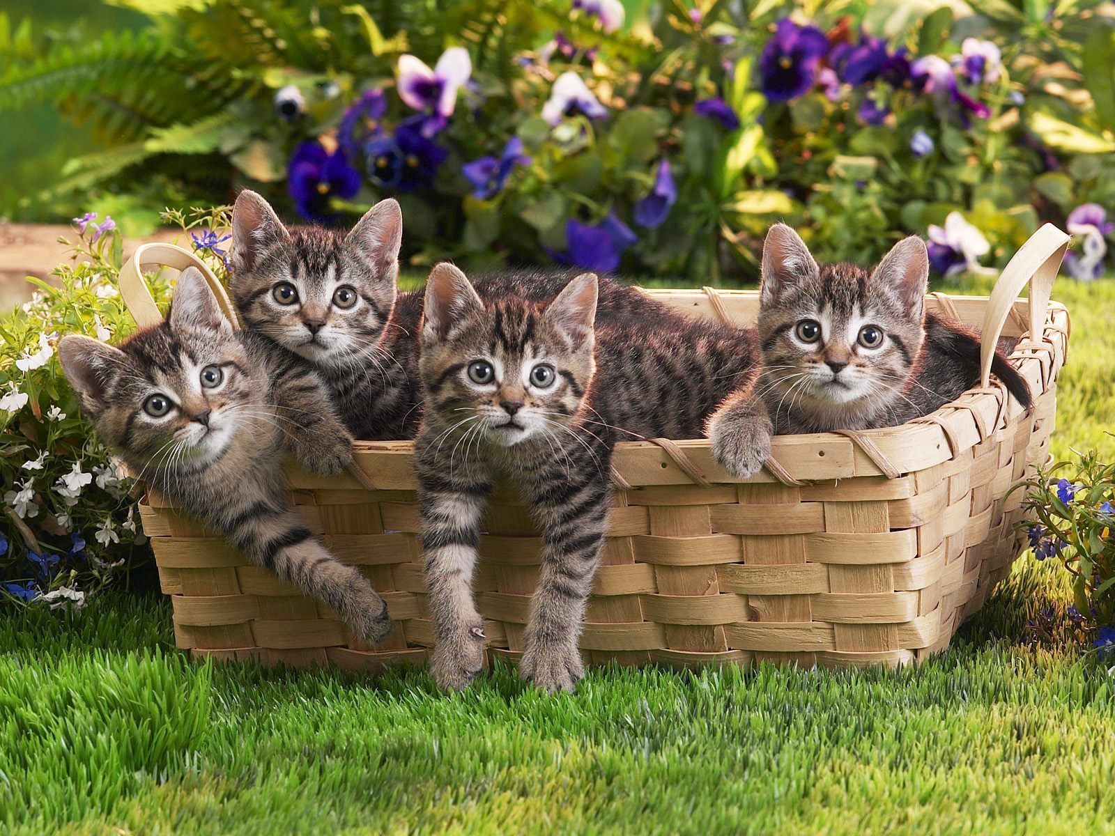 146153 Screensavers and Wallpapers Kittens for phone. Download Animals, Flowers, Grass, Basket, Kittens, Lots Of, Multitude pictures for free