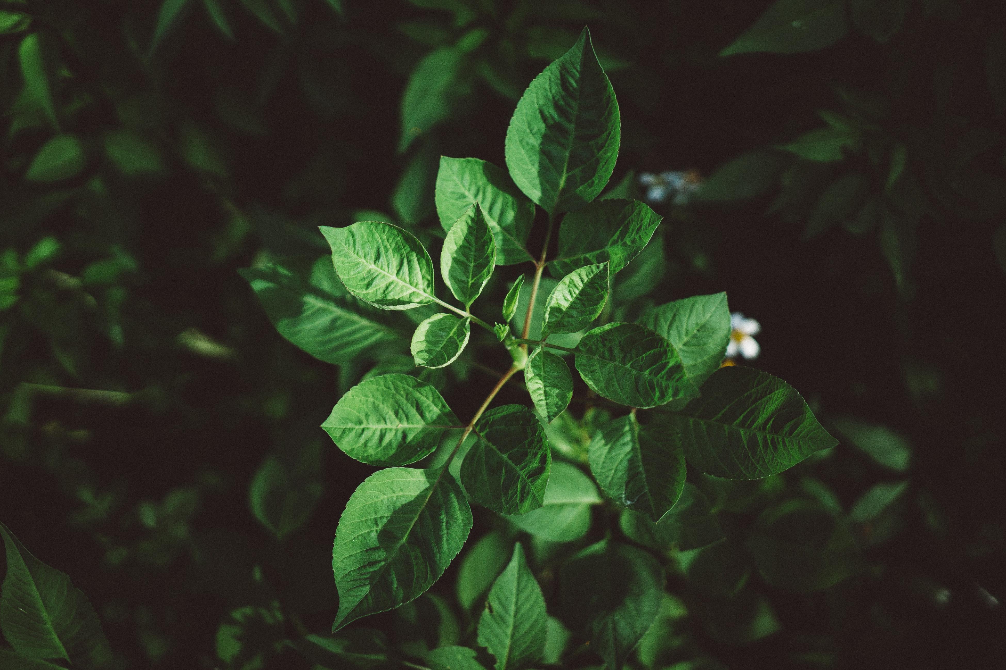 146426 скачать обои Макро, Листья, Растение, Зеленый, Растительность, Зелень - заставки и картинки бесплатно