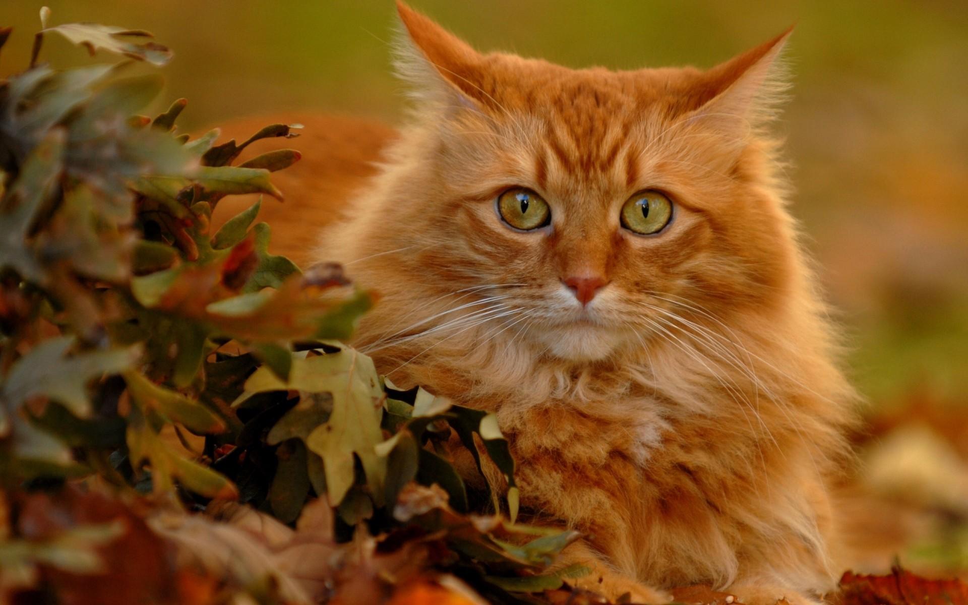 23871 скачать обои Животные, Кошки (Коты, Котики) - заставки и картинки бесплатно