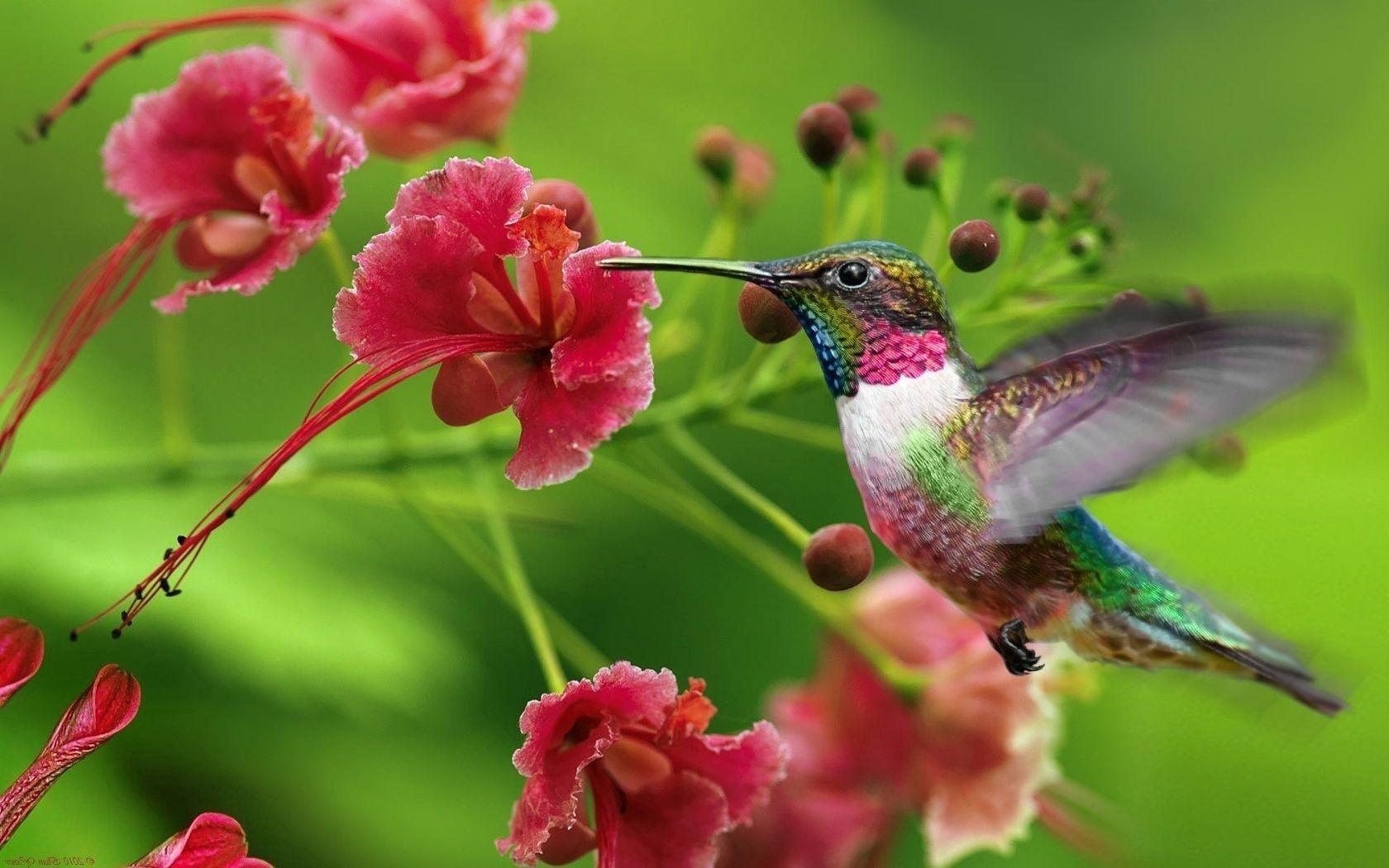 140755 Hintergrundbild 1024x600 kostenlos auf deinem Handy, lade Bilder Tiere, Kolibris, Welle, Fegen, Exotische Blume 1024x600 auf dein Handy herunter