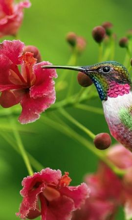 140755 download wallpaper Animals, Humming-Birds, Exotic Flower, Sweep, Wave screensavers and pictures for free