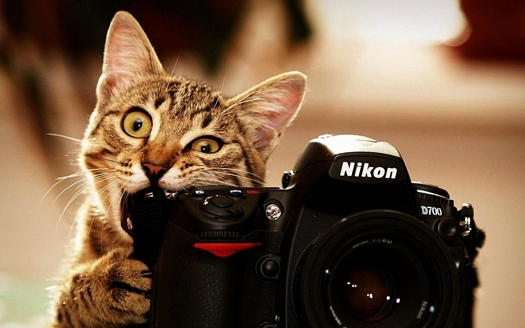 44631 скачать обои Животные, Кошки (Коты, Котики), Объекты - заставки и картинки бесплатно