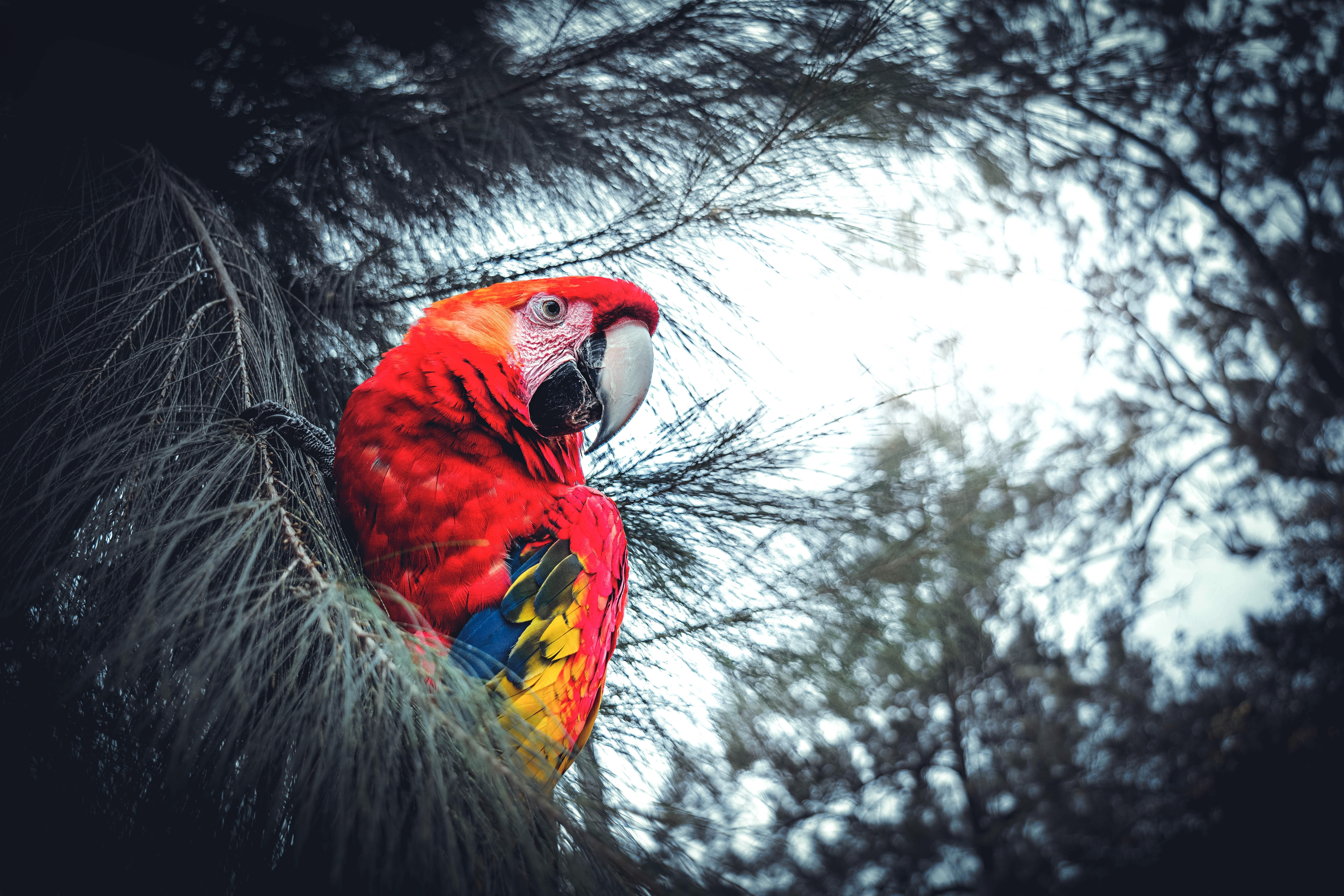 69615 Screensavers and Wallpapers Parrots for phone. Download Animals, Parrots, Bird, Branches, Macaw, Exotic pictures for free