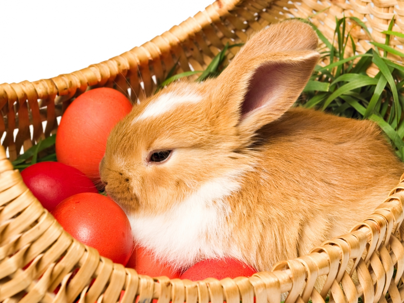 27225 download wallpaper Animals, Rabbits screensavers and pictures for free