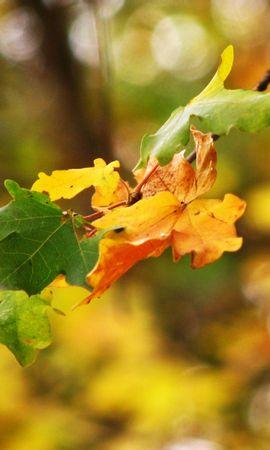 9146 скачать обои Растения, Листья - заставки и картинки бесплатно