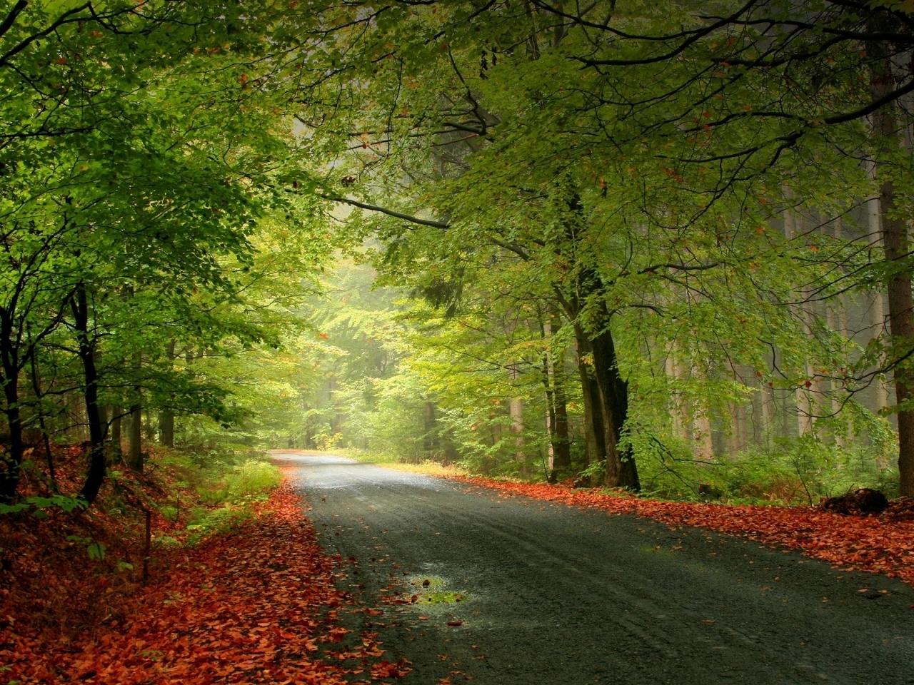 10541 скачать обои Пейзаж, Деревья, Дороги, Осень - заставки и картинки бесплатно