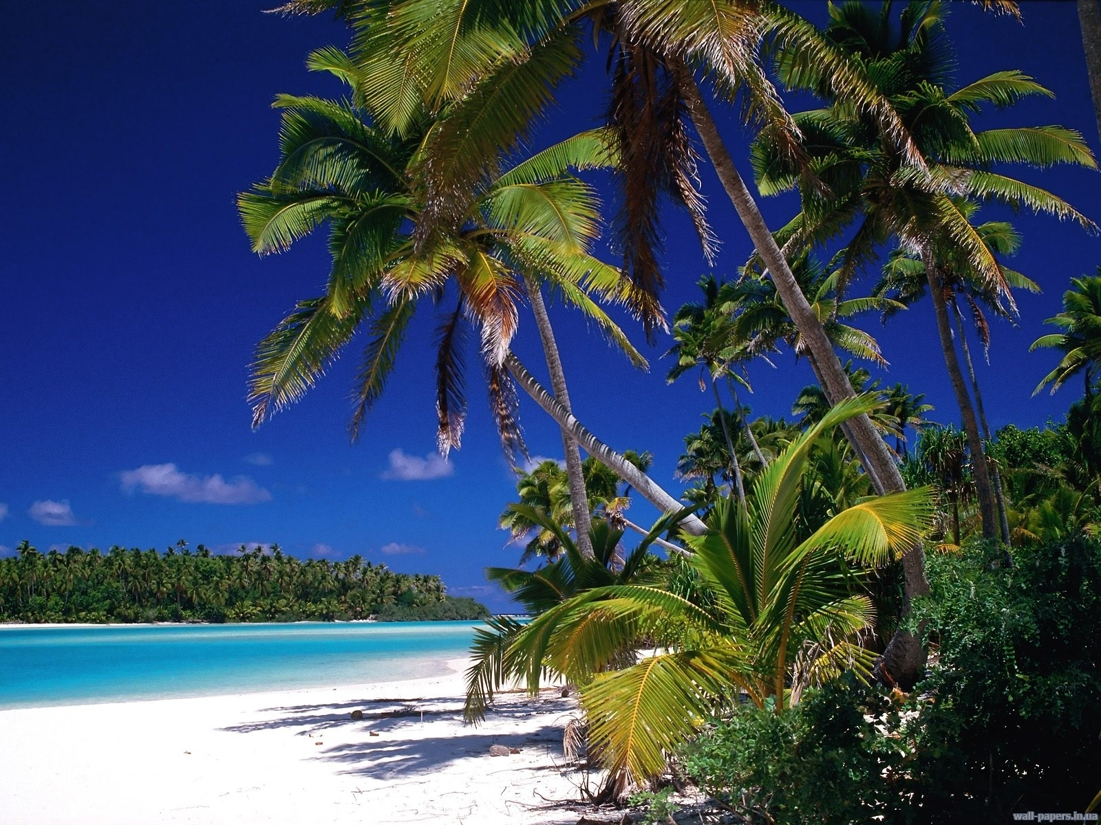 5605 download wallpaper Landscape, Sea, Beach, Palms screensavers and pictures for free