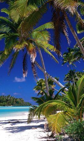 5605 завантажити шпалери Пейзаж, Море, Пляж, Пальми - заставки і картинки безкоштовно