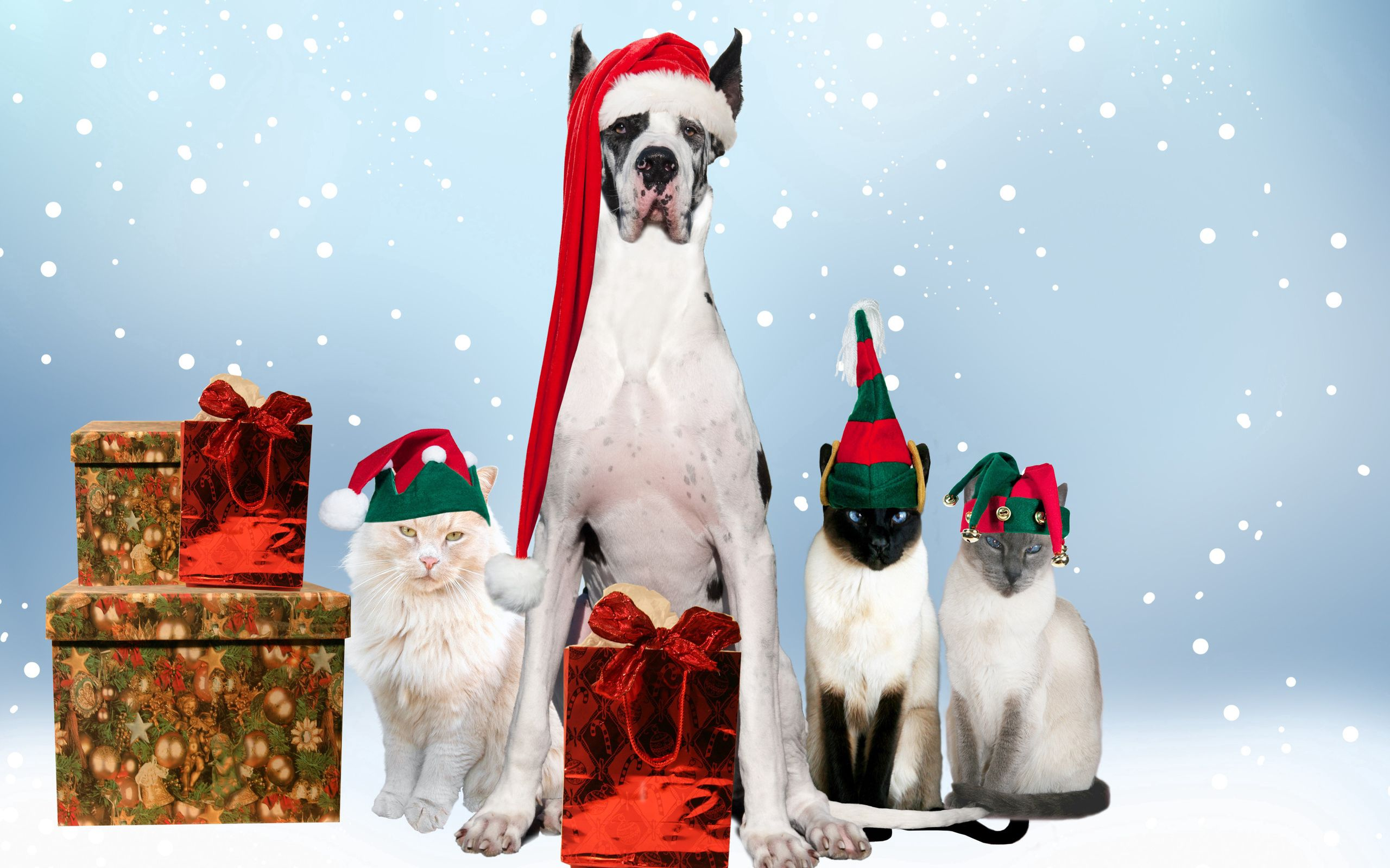 155312 download wallpaper Animals, Dogs, Cats, New Year, Festive, Holiday, Costumes screensavers and pictures for free
