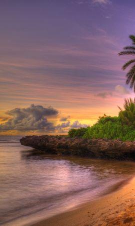 31291 скачать обои Пейзаж, Пляж, Пальмы - заставки и картинки бесплатно