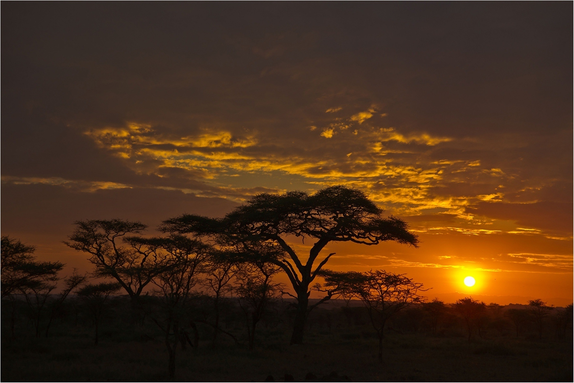 Скачать картинку Облака, Оранжевый, Вечер, Саванна, Деревья, Природа, Закат в телефон бесплатно.