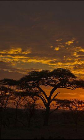 100646 скачать обои Природа, Закат, Оранжевый, Облака, Вечер, Деревья, Саванна - заставки и картинки бесплатно