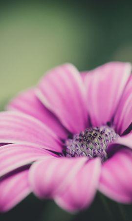 25581 скачать обои Растения, Цветы - заставки и картинки бесплатно