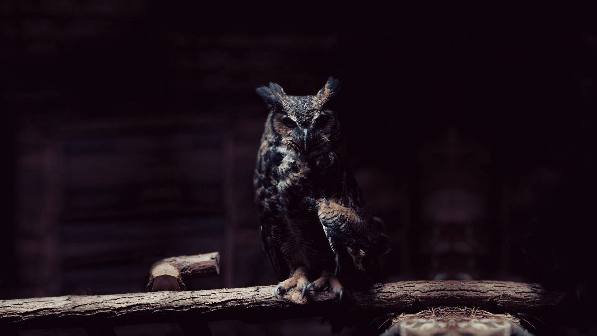 88214 download wallpaper Animals, Owl, Dark, Sit, Branch, Shadow screensavers and pictures for free