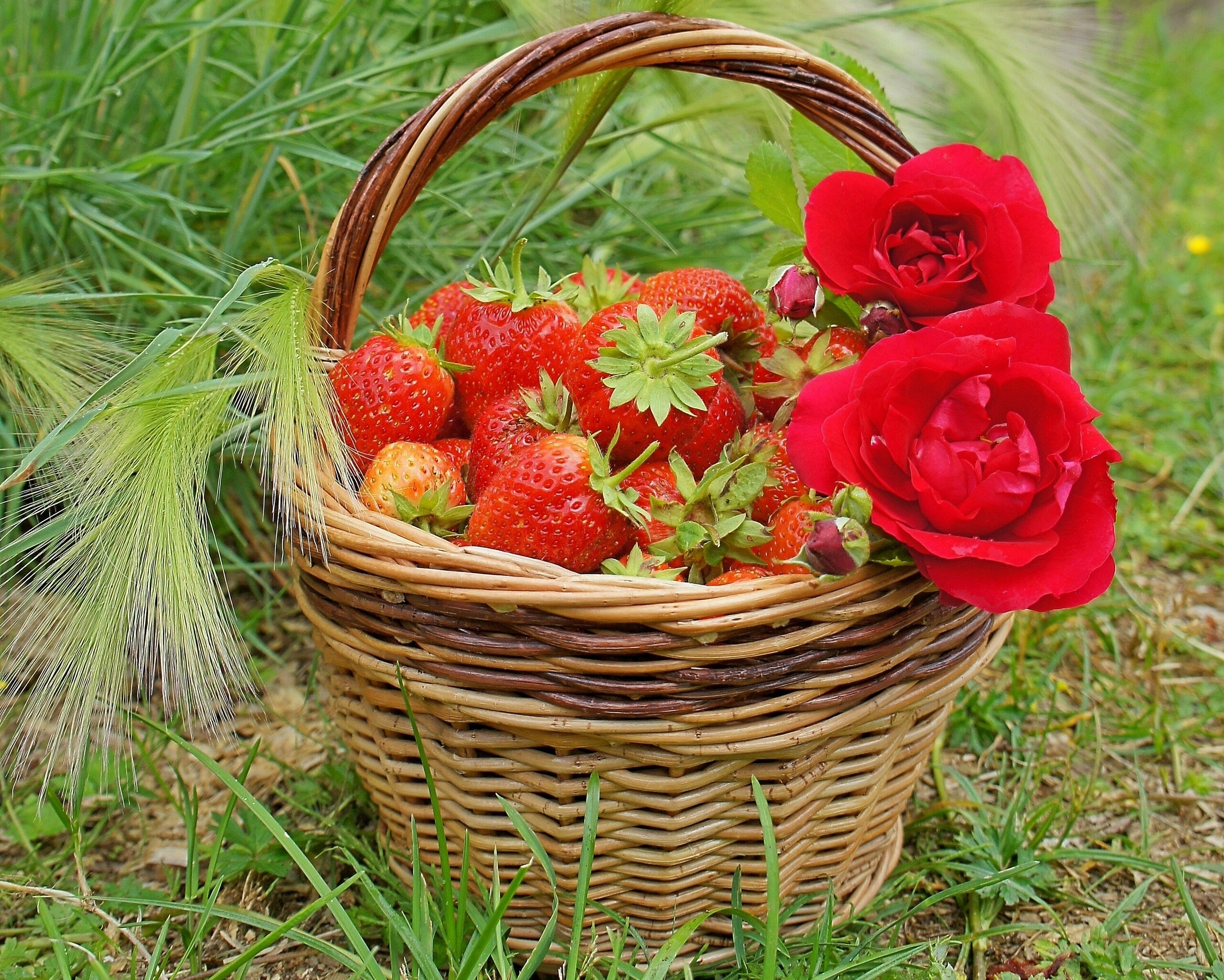 115583 download wallpaper Food, Strawberry, Roses, Berries, Basket screensavers and pictures for free