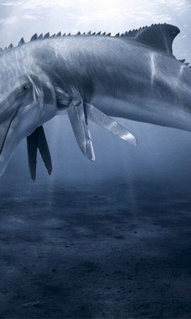 45477 baixar papel de parede Animais, Golfinhos - protetores de tela e imagens gratuitamente