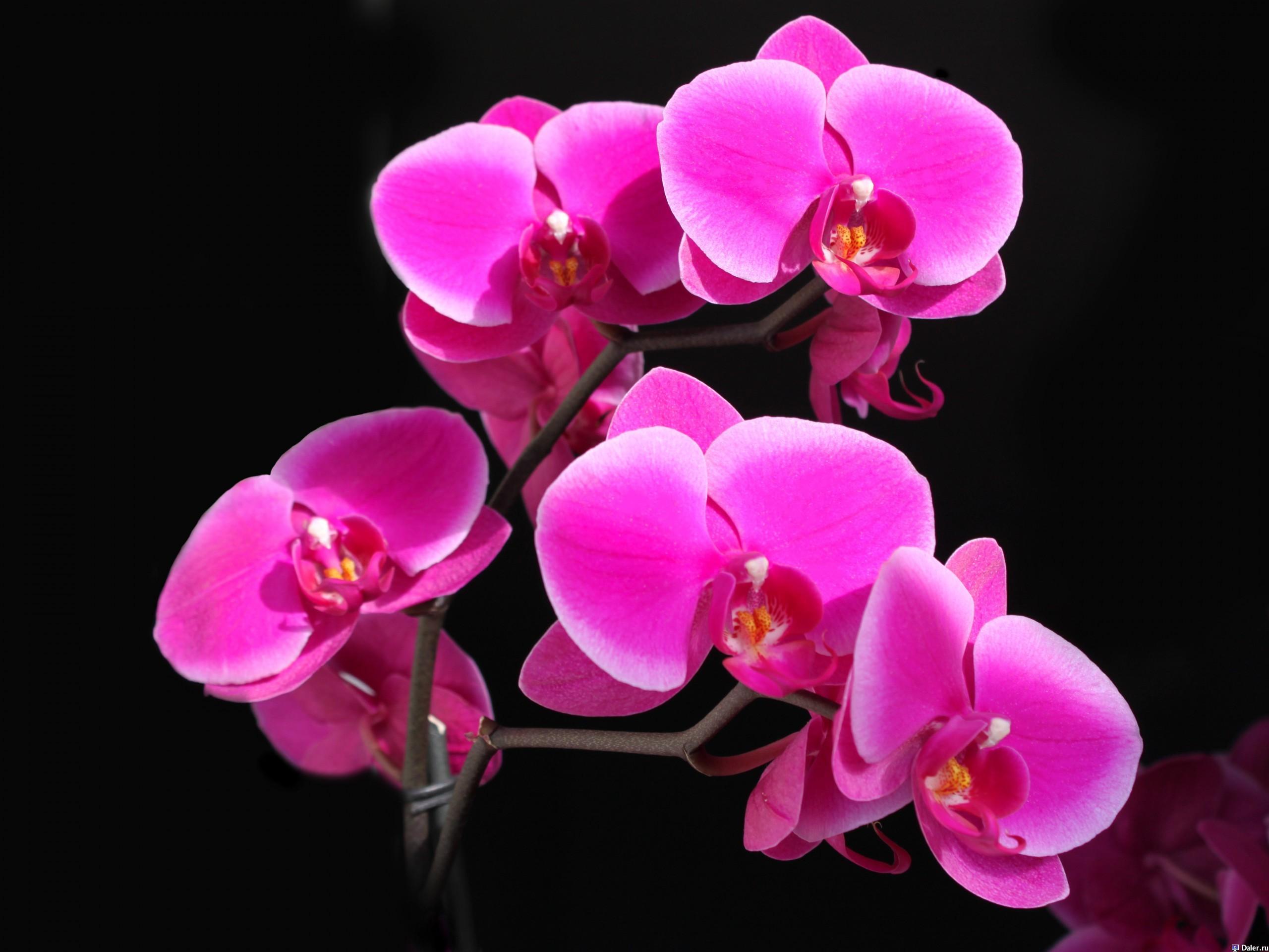 19743 скачать обои Растения, Цветы - заставки и картинки бесплатно
