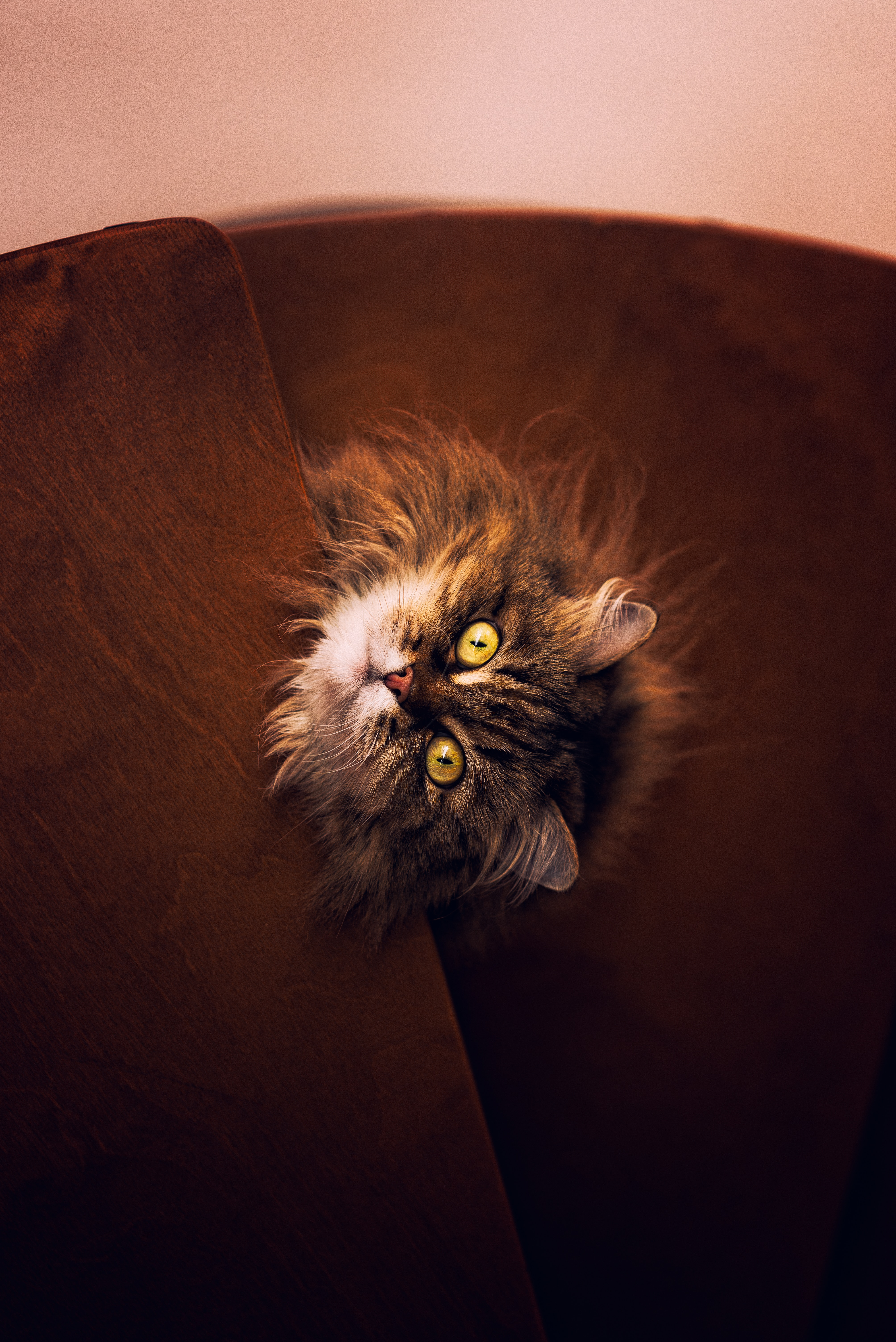 64390 download wallpaper Animals, Cat, Grey, Fluffy, Pet screensavers and pictures for free