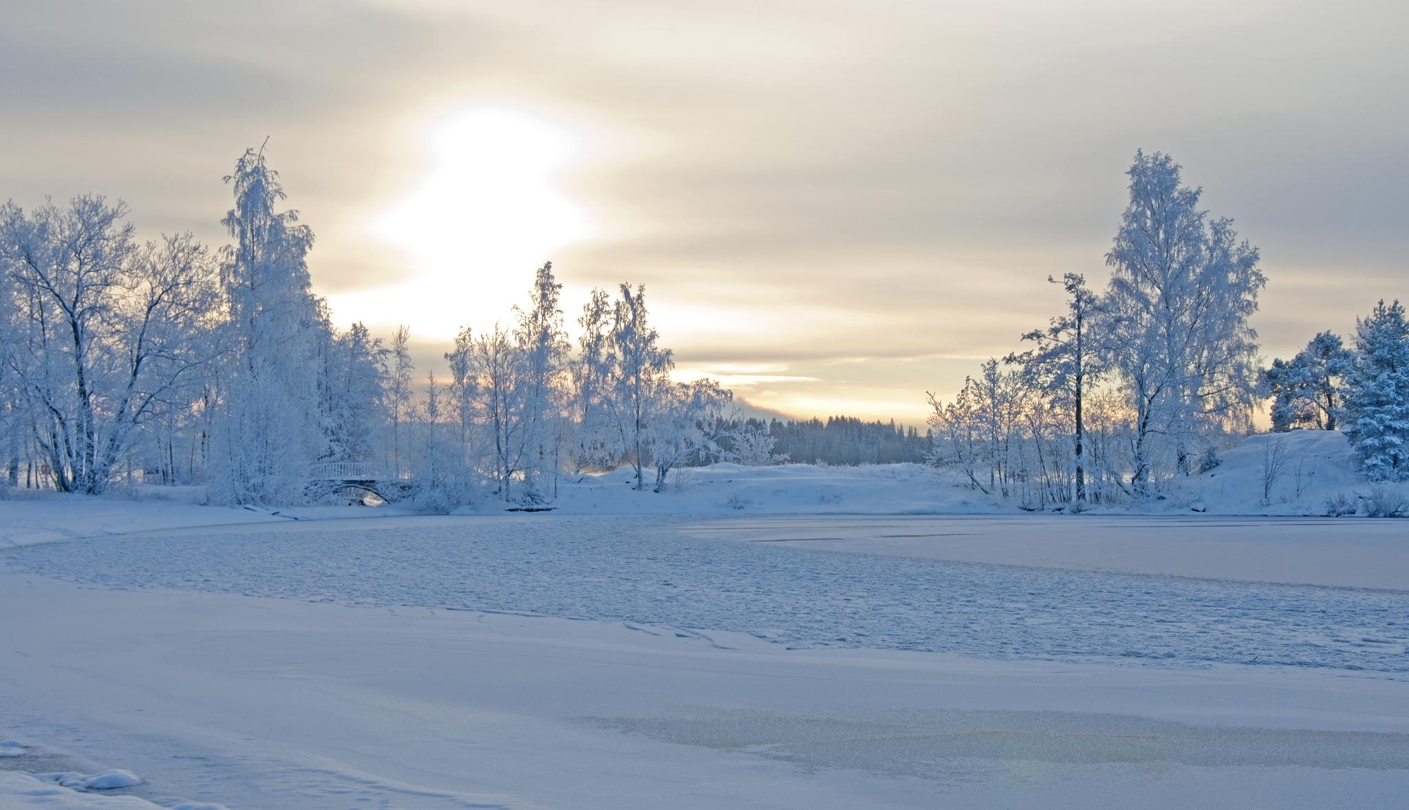 130405 papel de parede 320x480 em seu telefone gratuitamente, baixe imagens Neve, Inverno, Natureza, Árvores, Geada, Lindamente, É Lindo., Paisagem De Inverno 320x480 em seu celular