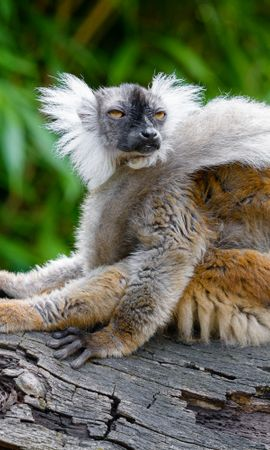 92370 Screensavers and Wallpapers Funny for phone. Download Animals, Lemur, Sight, Opinion, Funny, Animal, Wildlife pictures for free