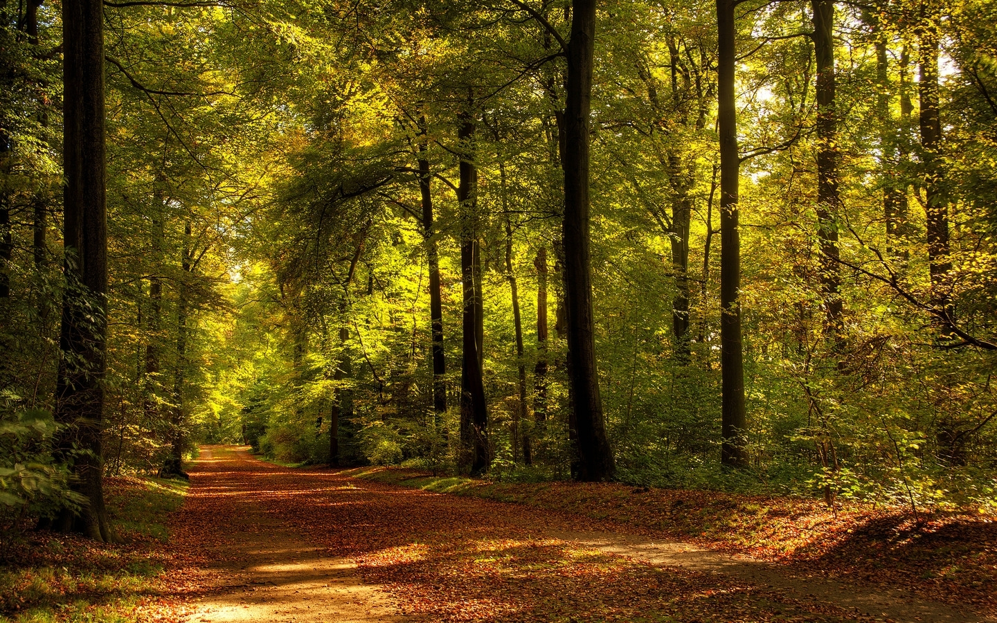 49611 download wallpaper Landscape, Nature, Trees, Roads screensavers and pictures for free