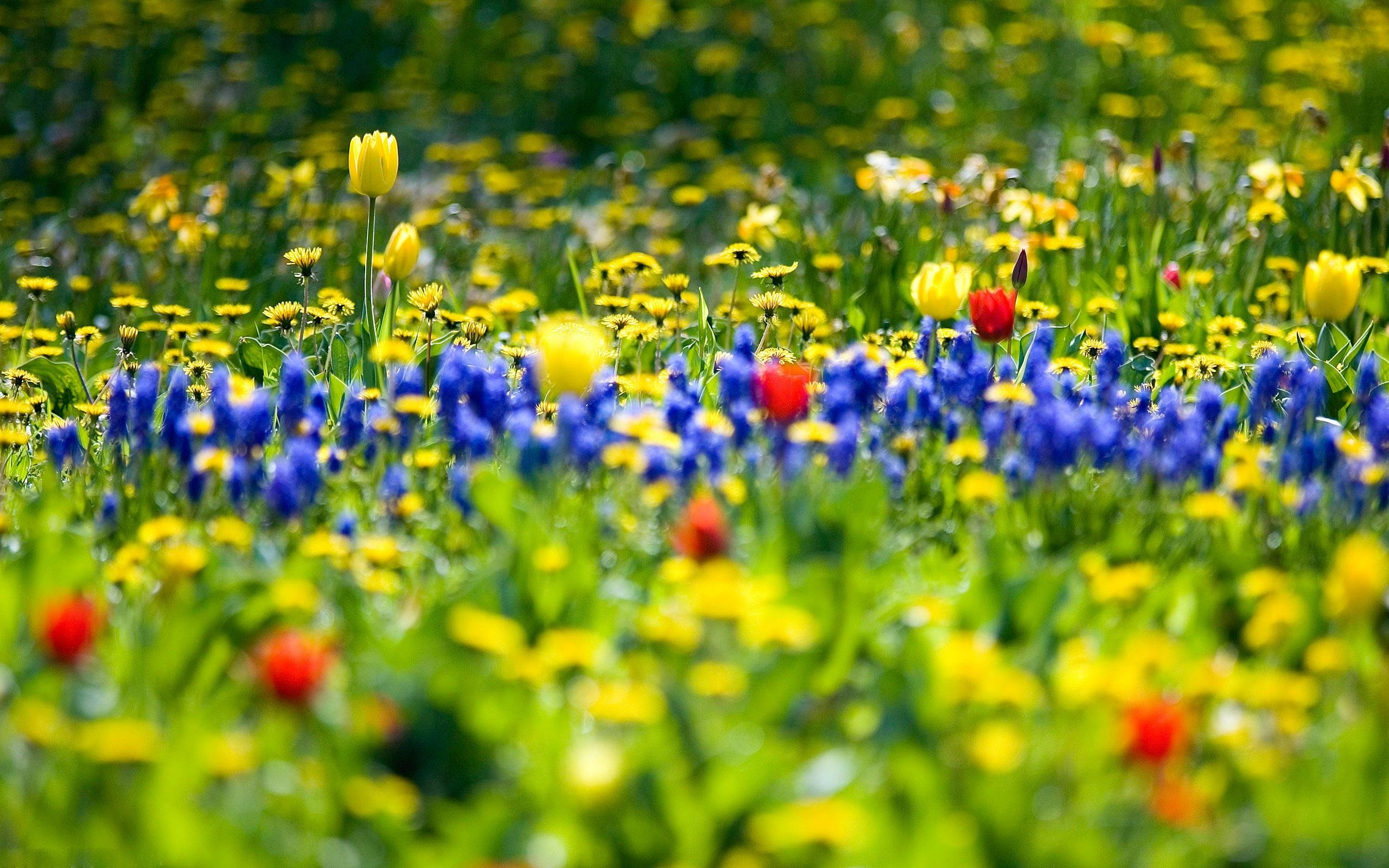 44023 скачать обои Растения, Пейзаж, Цветы - заставки и картинки бесплатно