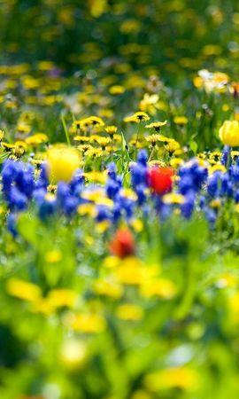 44023 télécharger le fond d'écran Plantes, Paysage, Fleurs - économiseurs d'écran et images gratuitement