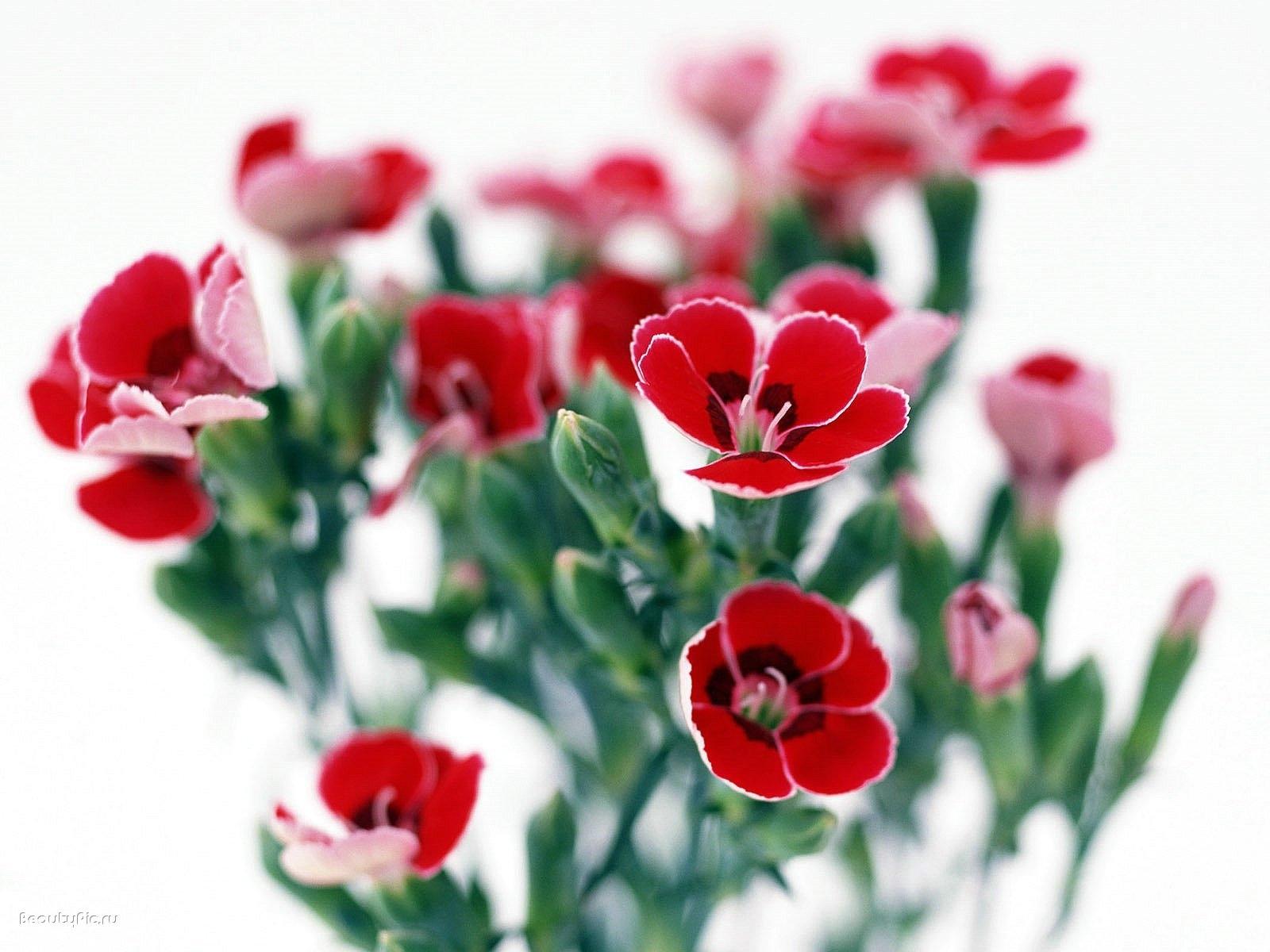 4363 скачать обои Растения, Цветы - заставки и картинки бесплатно