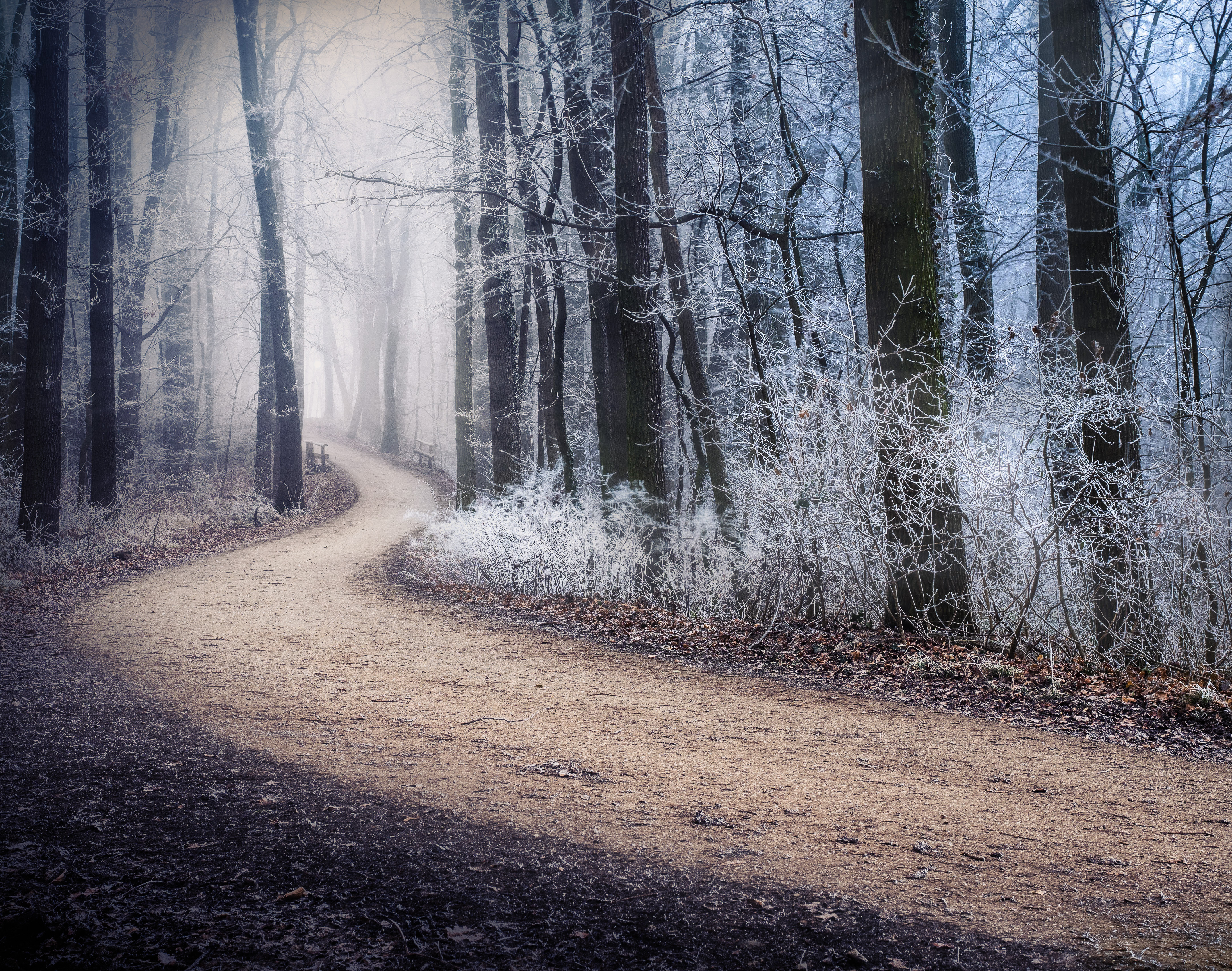 73001 Screensavers and Wallpapers Path for phone. Download Winter, Nature, Forest, Fog, Path, Frost, Hoarfrost pictures for free