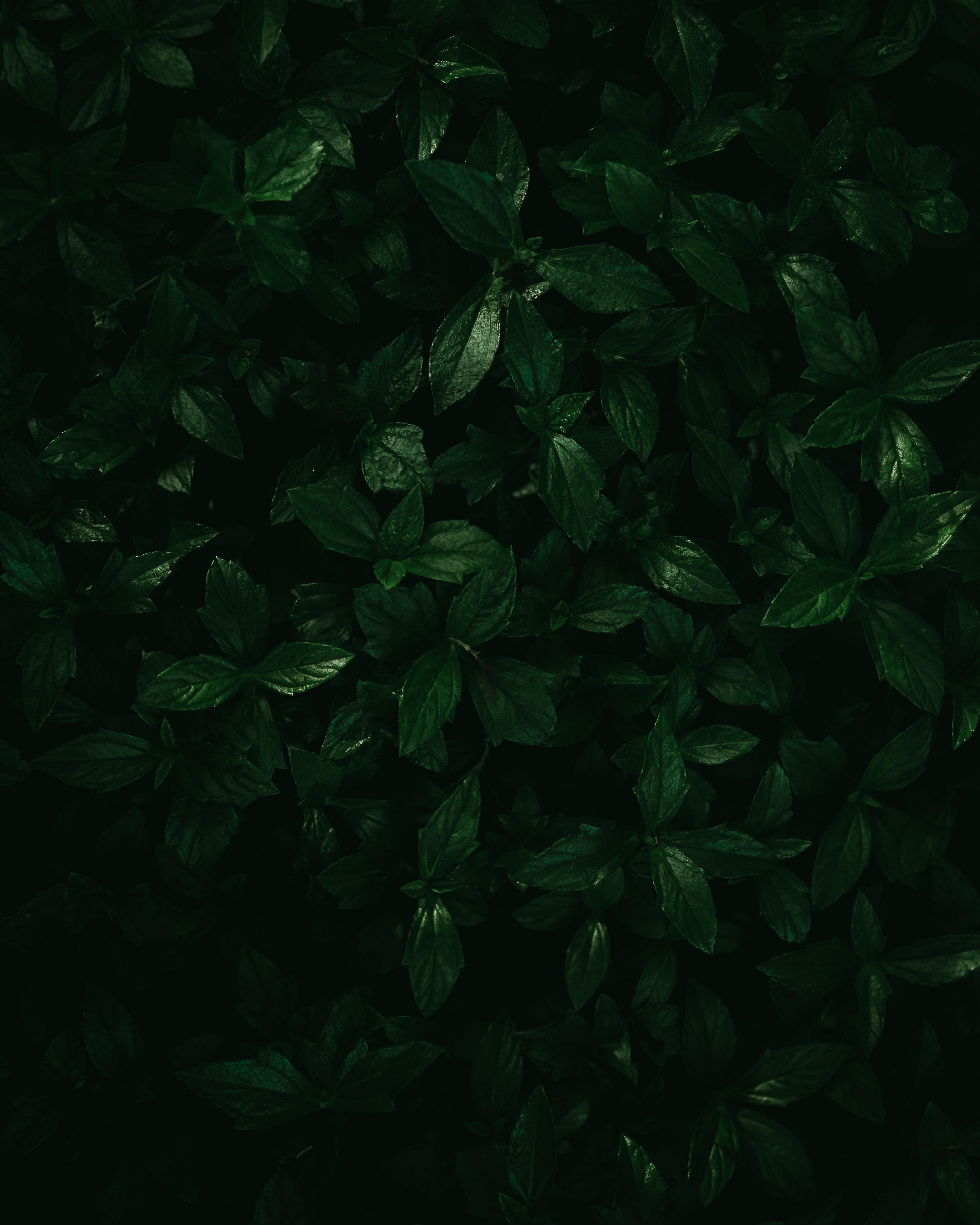 142283 скачать обои Макро, Растения, Листья, Зеленый - заставки и картинки бесплатно
