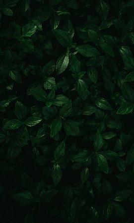 142283 descargar fondo de pantalla Macro, Plantas, Hojas: protectores de pantalla e imágenes gratis