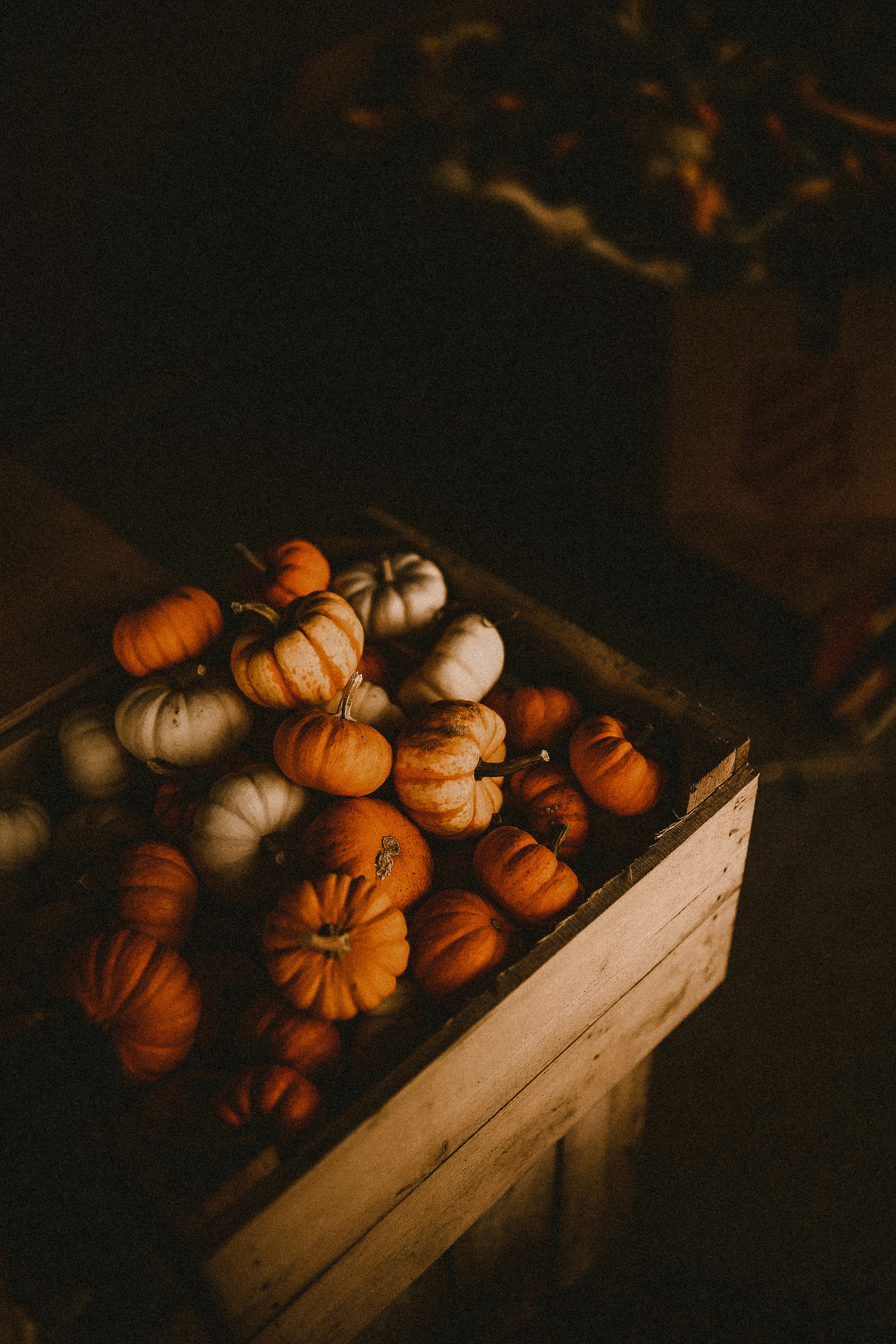 81491 Screensavers and Wallpapers Pumpkin for phone. Download Food, Pumpkin, Box, Ripe, Harvest pictures for free