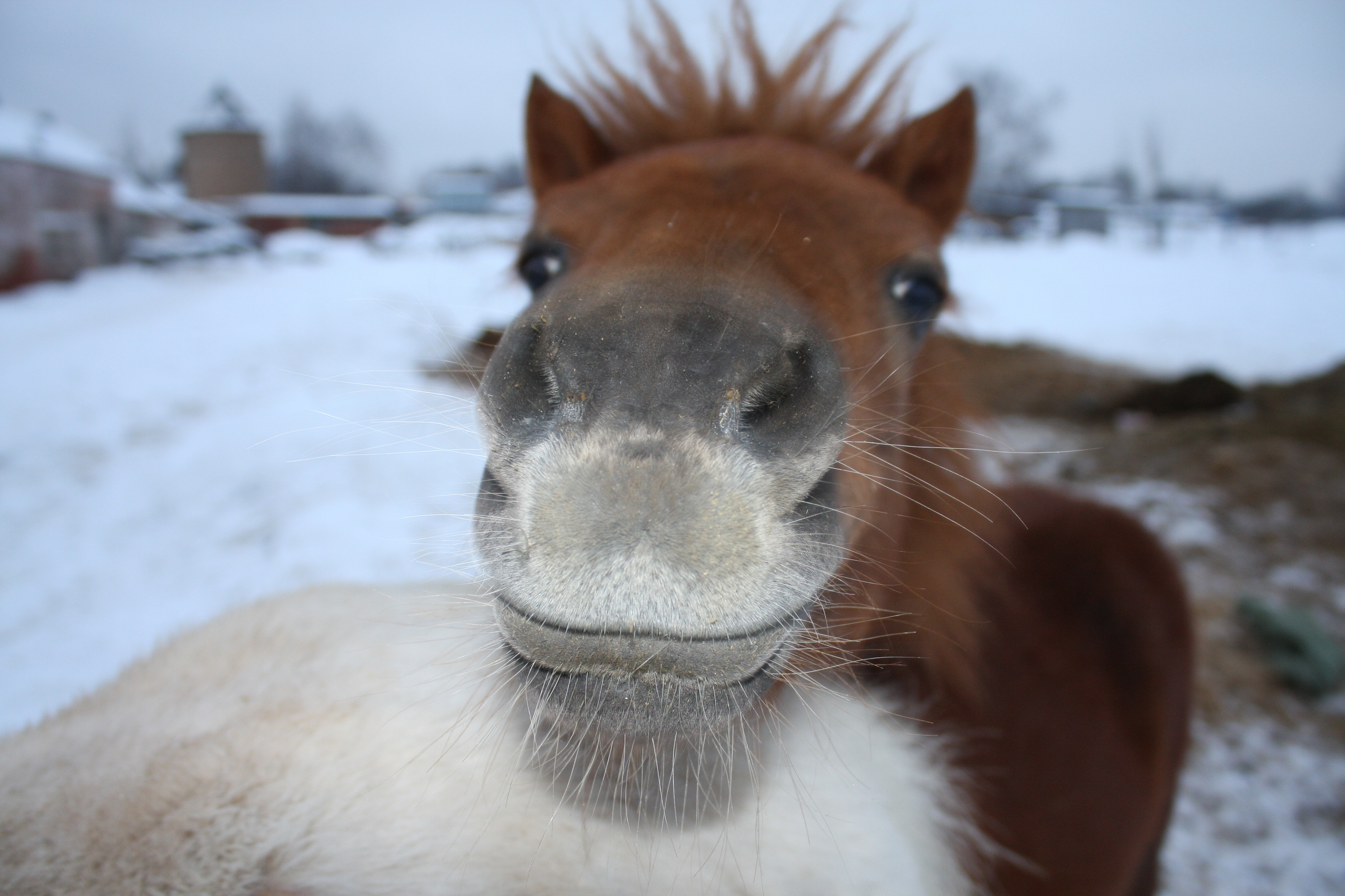 144557 download wallpaper Animals, Horse, Muzzle, Nose screensavers and pictures for free