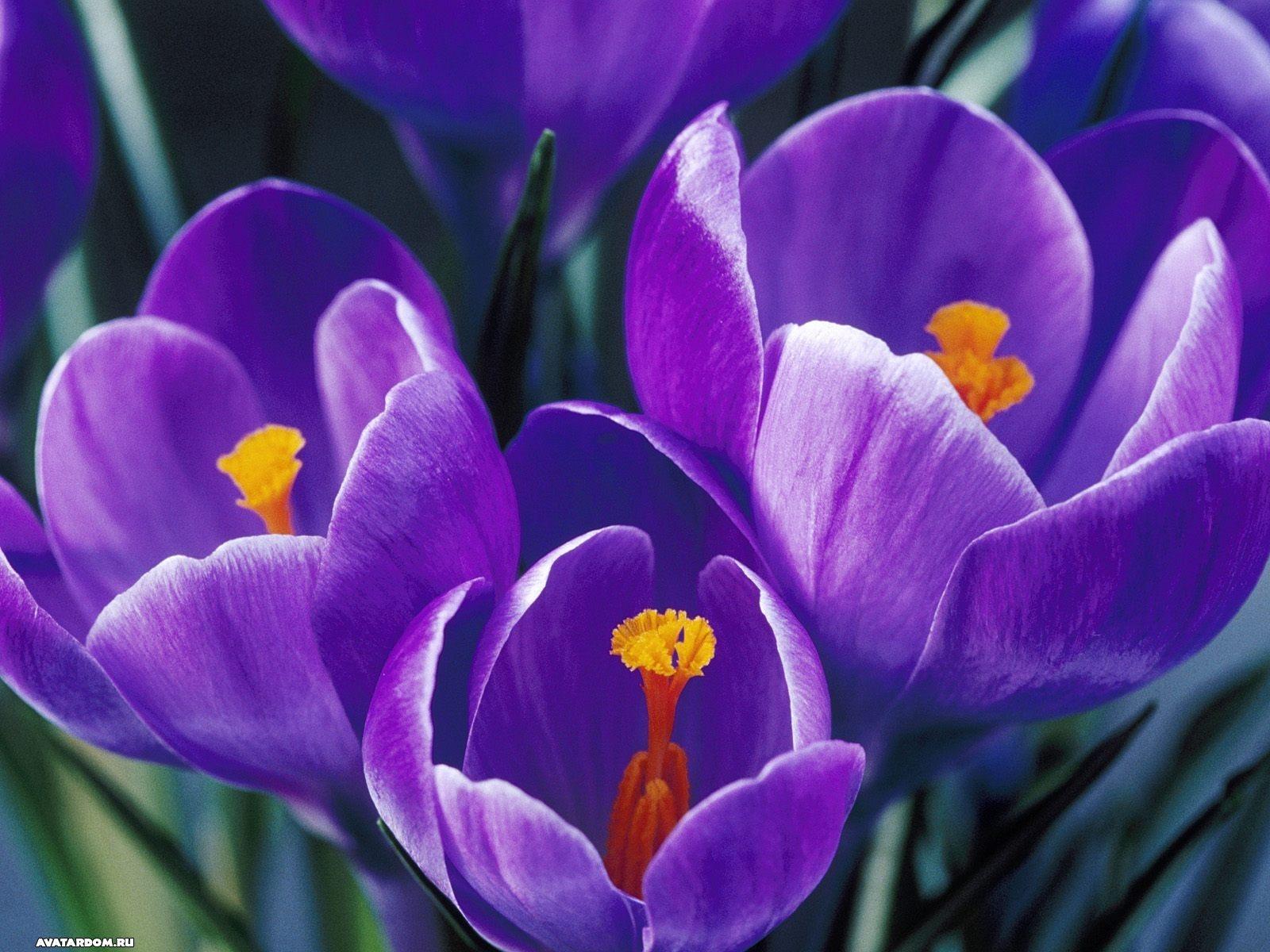 10508 descargar fondo de pantalla Plantas, Flores: protectores de pantalla e imágenes gratis